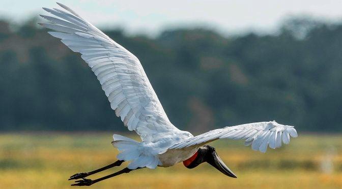 Turismo de MS presente na maior feira de Observação de Aves da América Latina