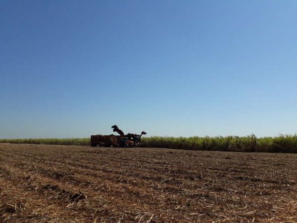 MS atinge 33,2 milhões de toneladas de cana-de-açúcar processadas