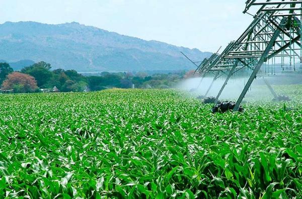 Período de desconto na energia usada em irrigação pode ser ampliado nos fins de semana e feriados Secretaria de Agricultura, Pecuária e Abastecimento/SEAPA