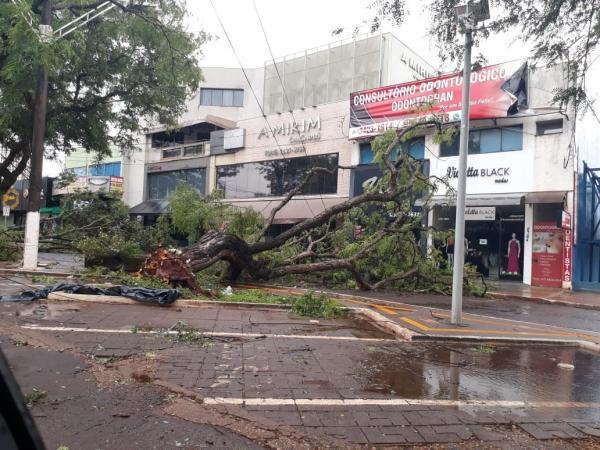 Temporal provoca queda de mais de 30 árvores e ruas ficam interditadas em Dourados