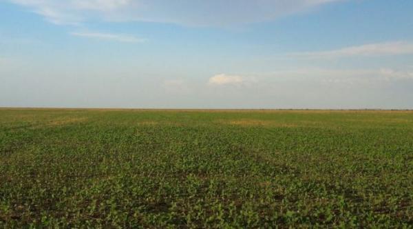 Área plantada de soja aumenta 140 mil hectares e bate recorde em MS