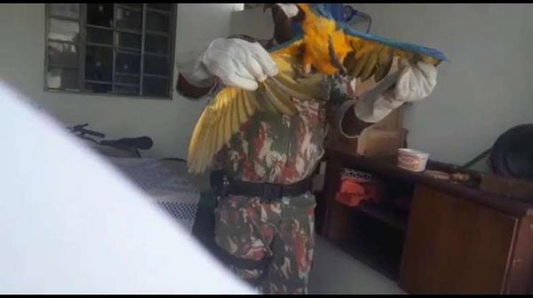 PMA captura duas araras em residências em intervalo de meia hora