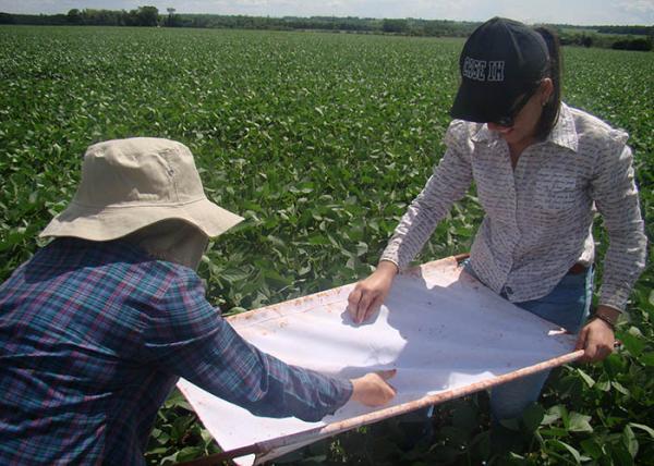 Manejo Integrado de Pragas poderia economizar R$ 300 milhões na produção de soja no MS