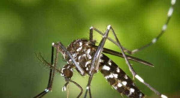 Dourados termina 2018 como campeã de casos de chikungunya em MS