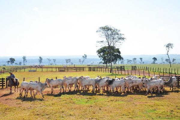 Carne bovina produzida em MS registra recorde nas exportações