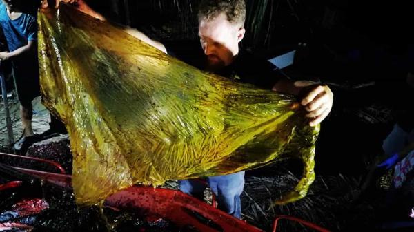 Baleia é encontrada morta com 40 kg de plástico no estômago