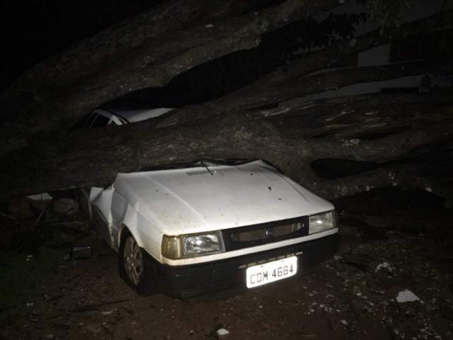 Árvore caída em cima de carro após temporal (Foto: BV News)