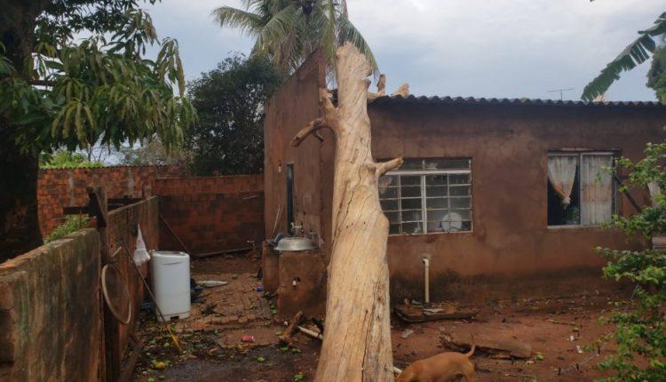 Uma árvore caiu em cima de uma residência no bairro Santa Luzia e deixou uma criança e uma mulher feridas (foto: Divulgação Rádio Caçula)