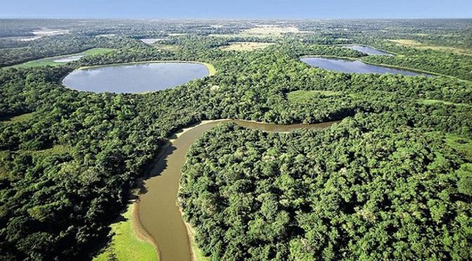 Vista de parte da área de mata atlântica no território de MS - Foto: Divulgação/sosma.org.br