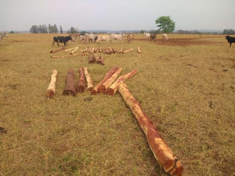 Dono de sítio é autuado por utilizar madeira da espécie aroeira ilegalmente