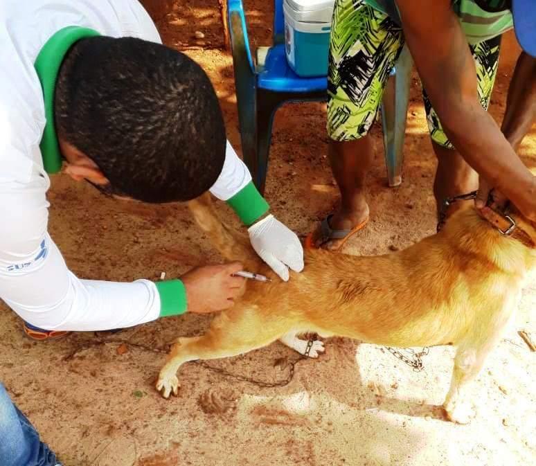 Deixar de vacinar animais configura maus-tratos, conforme lei sancionada em Dourados - Crédito: Divulgação/Prefeitura de Dourados