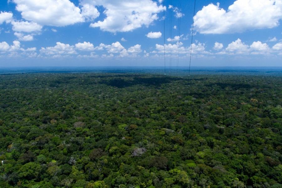 Crédito: Arquivo MMAM / anutenção da floresta em pé é uma das formas de contribuir para redução das emissõesManutenção da floresta em pé é uma das formas de contribuir para redução das emissões