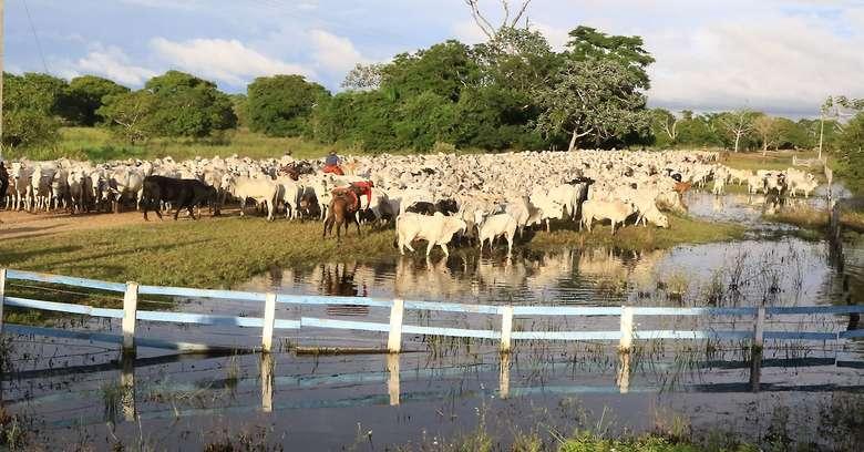 Censo aponta que 61% das propriedades rurais são da agricultura familiar