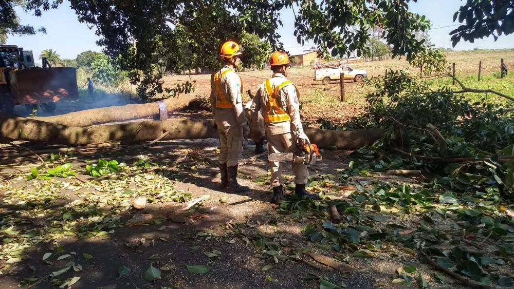 Bombeiros foram acionados após parte de uma figueira cair na MS 276 entre Deodápolis e Lagoa Bonita