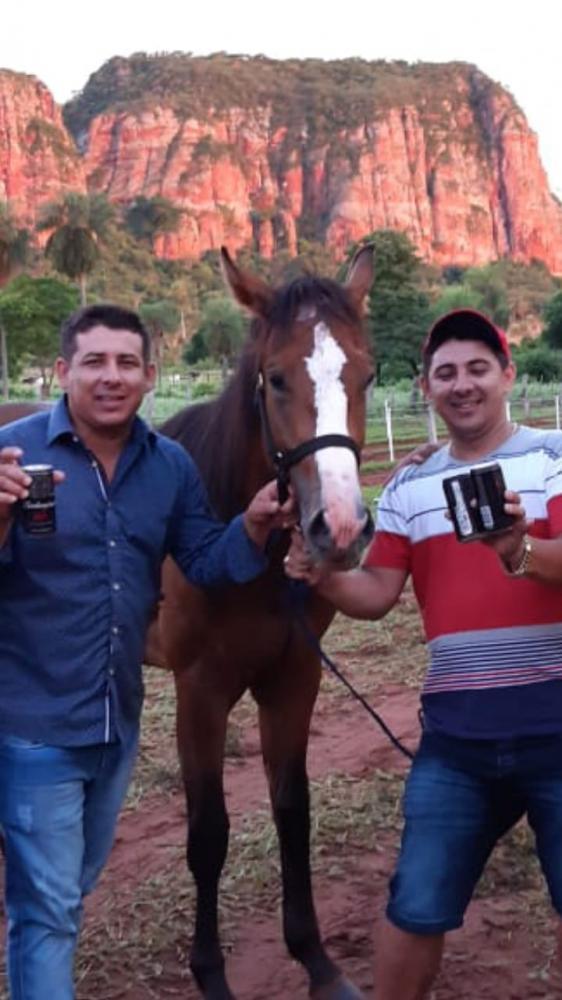 Irmãos participavam de corrida de cavalos - Crédito: Divulgação