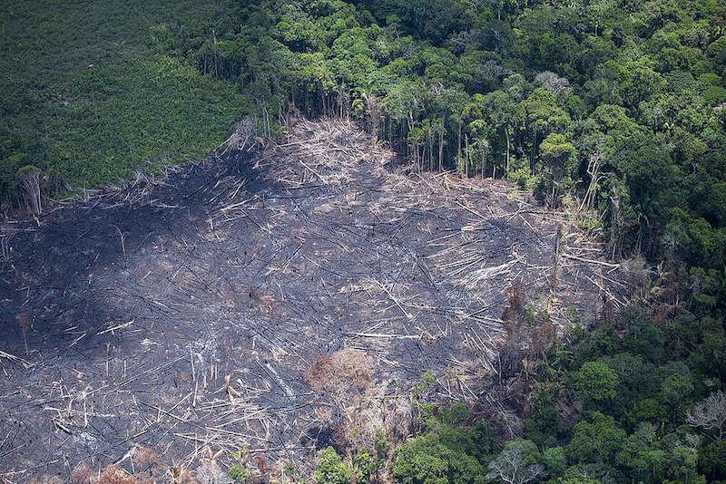 (Foto Daniel Beltra / Greenpeace)