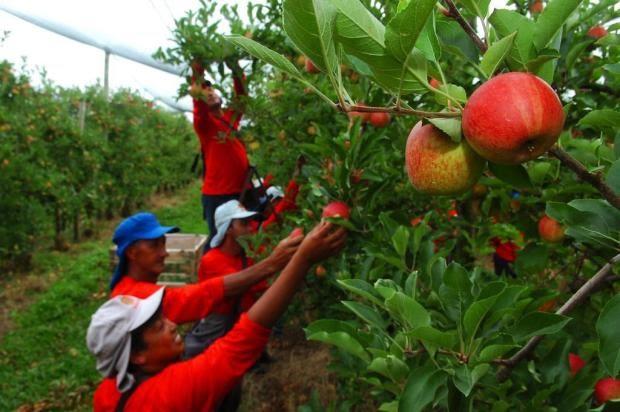 Empresas devem contratar cerca de 5 mil índios guarani-kaiowá e terena do Estado - Crédito: Divulgação