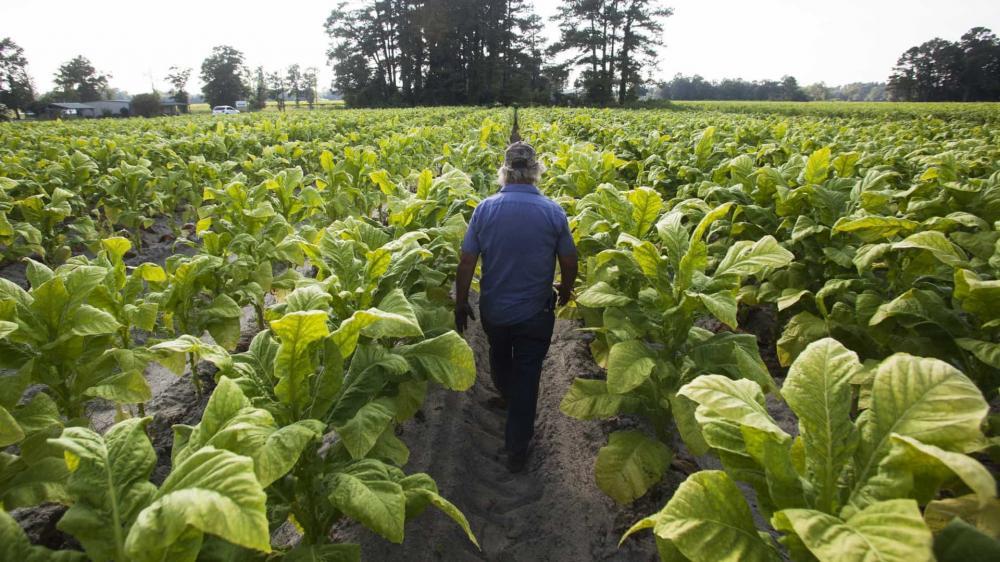Brasil pode perder exportação agrícola ao Irã para Argentina