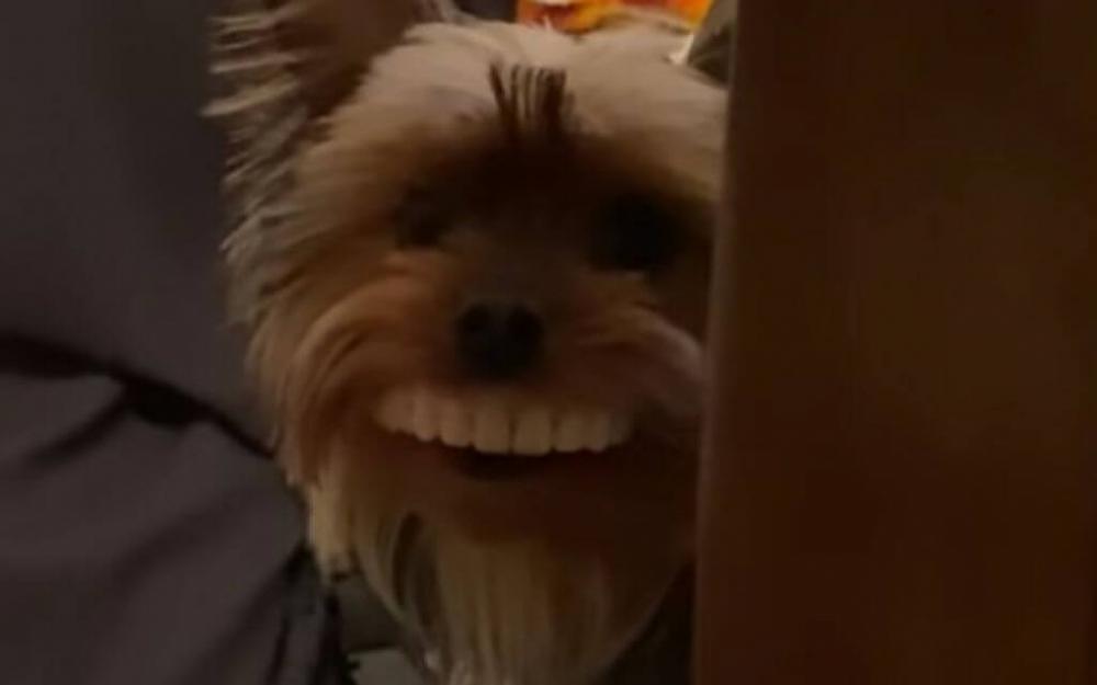 Cão encontra dentadura e anda com ela na boca; assista