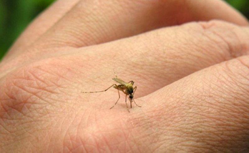 Em uma semana, MS registra mais de 2,7 mil novos casos de dengue