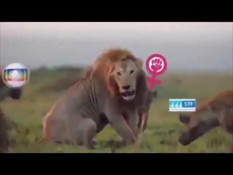 Em vídeo, Bolsonaro é leão prestes a ser atacado por hiena que representa STF; Celso de Mello reage